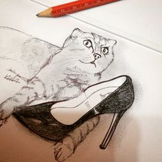 Louboutin and the cat