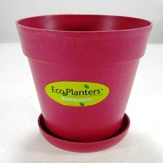 "4"" Biodegradable House Plant Pot W/saucer in Fusia"