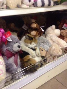 Die 46 Besten Bilder Von Alles Für Die Katz Funny Animals Dog