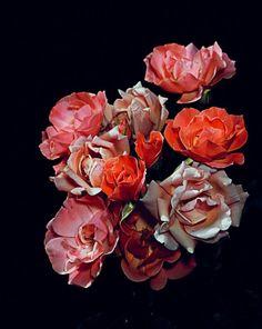 """Graham Lott, """"Rose Garden 07"""""""