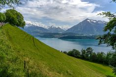 Slope in front of Lake Thun with the Bernese Alps in the Background Lake Thun, Bern, Alps, Explore, Mountains, Nature, Travel, Viajes, Naturaleza