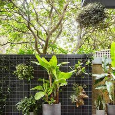 Landscapers, Landscape Design Company | Harrison's Landscaping, Sydney NSW | Bondi Backyard Pool Designs, Pool Landscaping, Building A Pool, Building Design, Landscape Design, Garden Design, Sydney Gardens, Jacuzzi, Plant Pictures