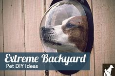 Blog - 7 Extreme Dog & Cat DIY Projects for Your Backyard