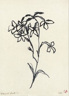 Illustrations, Illustration Art, Vintage Flower Prints, Vintage Drawing, Botanical Wall Art, Art Design, Oeuvre D'art, Art Inspo, Line Art