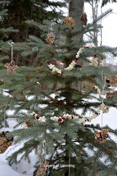Make a tree for the birds with popcorn and cranberry garland, pinecone ornaments, and birdseed batter (recipe on the blog post).