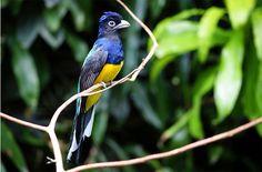 Beautiful Summer Bird Photos