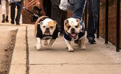 Butler and GU mascots hanging out!