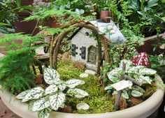 Steal the latest Nice Garden Fairy Houses Miniature Fairy Garden suggestions from Susan Wilson to makeover your space. Indoor Fairy Gardens, Fairy Garden Plants, Mini Fairy Garden, Fairy Garden Houses, Diy Garden, Small Gardens, Fairy Gardening, Unique Gardens, Garden Crafts