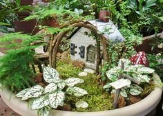 7+ Best Fairy Garden Ideas for Your Inspiration Indoor Fairy Gardens, Fairy Garden Plants, Mini Fairy Garden, Fairy Garden Houses, Diy Garden, Fairy Gardening, Garden Crafts, Miniature Plants, Miniature Fairy Gardens