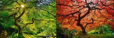 10 Magnificent Summer To Autumn Transformation Views To See. WOW!