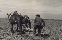 Al finalizar el invierno el primer trabajo era levantar la tierra para airearla y secarla, con el fin de matar malas hierbas y una vez seca inundarla y mediante otros trabajos volver la dejar hecha barro para poder plantar.