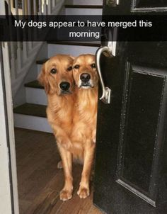 """Funnowtime, Social Fun Platform We share in funny pictures and funny animals categories while sharing while """"Funny Dog Pictures Of The Day - 25 Pics"""" Funny Animal Jokes, Funny Dog Memes, Animal Humour, Memes Humor, Cute Funny Dogs, Cute Funny Animals, Humorous Animals, Animals Dog, Cute Animal Pictures"""