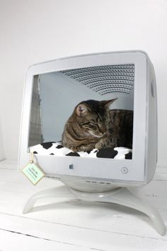 I want to make one of these for Zeus - think he would love it! Son Chat, Old Computers, Apple Computers, Animal Projects, Diy Projects, Cat Lady, Crazy Cats, Cute Animals, Diy Stuffed Animals
