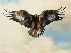 Spread-Eagle-_2800_2k_2900_.jpg 1,998×1,523 pixels