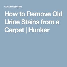 How to Remove Old Urine Stains from a Carpet   Hunker