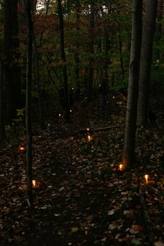 ♁Enchanted Forests♁
