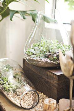 Schnelle Terrarium Bauanleitung – legen Sie einen Mini Garten an! Gläser Design Ideen