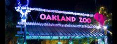Oakland Zoo, Oakland California, Zoo Lights, Educational Programs, Wildlife Conservation, Family Day, Holiday Activities, Happenings, Bay Area