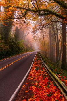 Autumn… - via: carasposa - Imgend