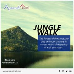 Get yourself a budget stay booked with Araavali Trails and enjoy an adventurous stay while enjoying jungle walk to the nearby sanctuaries that keeps Aravali's ecosystem upright. — in Palanpur. Adventure Resort, Best Resorts, Horse Riding, Swimming Pools, Trail, Picnic, Destinations, Budget, Camping