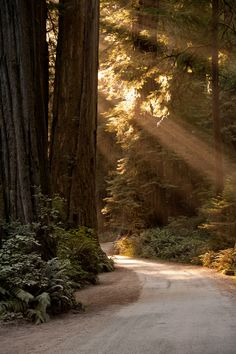 California Redwoods by Gregory Harp, via 500px