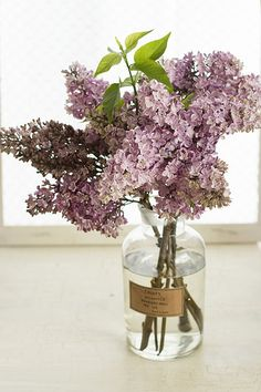 I really would like lilac bushes right outside my bedroom windows!