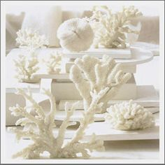 Coral. The natural beauty of coral is revealed with our authentic replicas. Cast from natural coral, you receive all of the unique texture as a natural coral piece provides, but in an eco-friendly product. Display grouped or individually to create a seaside vista. The ivory color repeats the natural hue and compliments any existing decor style. Available in Coral Branch; Ear Coral; Classic Coral; Mushroom Coral and a trio of Coral Branches.