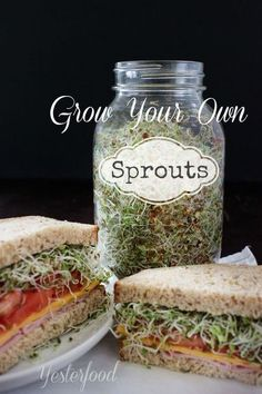 I love the fresh, crunchy taste that sprouts give to salads and sandwiches. Lots of different kinds of seeds can be sprouted and eaten. Some favorites are alfalfa, radish, broccoli, and lentils. Clean Eating, Healthy Eating, Stay Healthy, Growing Sprouts, How To Grow Sprouts, Growing Microgreens, Cocina Natural, Vegan Recipes, Cooking Recipes