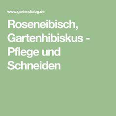 Roseneibisch, Gartenhibiskus - Pflege und Schneiden