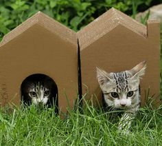 8b15cf1e90 18 Formas creativas de hacer feliz a tu gato con una caja de cartón Casas De