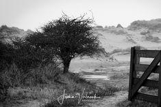 Black/White - Meijendel private area dunes Holland