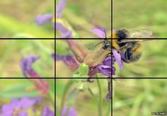 A great example of what the rule of thirds means.  BBC wildlife photography tips