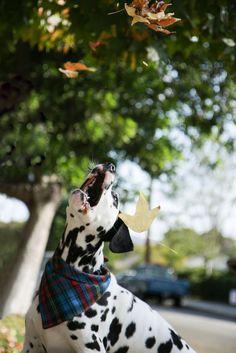 DIY: Dog Bandana - A Pair of Pears, GRACE