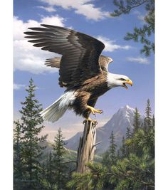 "Reeves Paint By Number Artist Collection 9""X12-Screaming Eagle"
