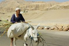 The man and the donkey - Luxor, Luxor