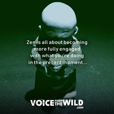 Zen is all about becoming more fully engaged with what you're doing in the present moment. Zen Buddhism Quotes, Zen Quotes, Motivational Quotes, Spiritual Wisdom, Spiritual Growth, What Is Zen, Spiritual Cleansing, Wellness Quotes, Life Philosophy