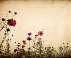 vintage flower paper background stock photo © ilolab (#156572)   Stockfresh