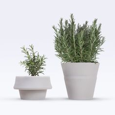 Fold Pot by Emanuele Pizzolorusso - grows with the plant