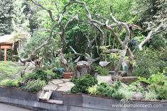 The Sculptor's Picnic Garden by Walker's Nurseries was awarded a Gold Medal by the Royal Horticultural Society Judges and the prestigious award of Best Artisan Garden.  The garden was designed by Graham Bodle and built and sponsored by Walker's Nurseries.