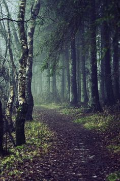 """her mother said wisely to little red riding hood, as she waved her goodbye Won in the Best of Phtography Section in the Group """"AllWorldWorks"""" [link] Don't choose the dark path Terre Nature, Beautiful World, Beautiful Places, Magical Forest, Wild Forest, Black Forest, Walk In The Woods, Jolie Photo, Pathways"""