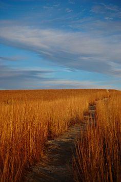 Path at Konza Prairie in the Flint Hills of Northeastern Kansas.