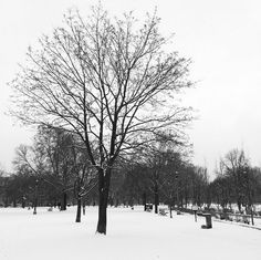 If we stop complaining long enough, we can see the beauty in #winter. Yes? You with me? www.kimdeon.com