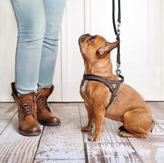 Pozor na nevhodné obojky pro psy, někteří psi potřebují spíše popruhy. Training Your Puppy, Dog Training Tips, Potty Training, Education Canine, Dog Potty, Dog Training Techniques, Service Dogs, Dog Walking, Large Dogs