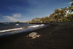 Punalu'u Black Sand Beach.  I was here.