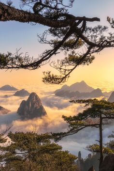 Mt. Huangshan in Anhui, China by Obb Chao Follow @travelgurus for the best Tumblr Images