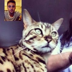 Face timing your cat = brilliance