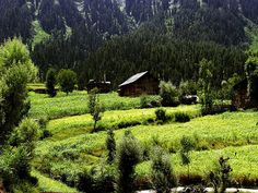 wistfullycountry: The Beautiful Kashmir by meansmuchtome on Flickr.