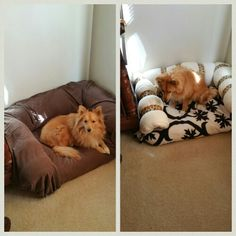 Homemade dog bed with bolsters! I just used leftover pillows and rolled them and taped them:) cover with a sheet and it's washable:)