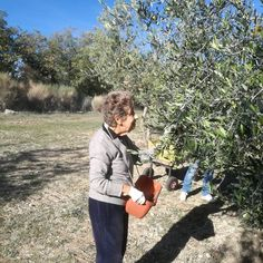 Harvest is still on the way but it's time to start thinking on the mill!!! #chiantigreengold #pornanino #chianti #delicious #eat #eatclean #farmtotable #farm #growyourownfood #harvest #healthy #healthyeating #healthyfood #olive #oliveoil #extravirginoliveoil #organic #organicfood #photo #photooftheday @ Pornanino