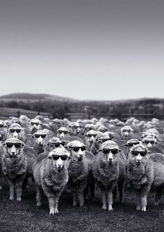 woolmarks cool wool ampaign for summer 2012